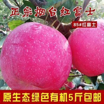 紅富士蘋果 紙袋 片紅 80mm以上