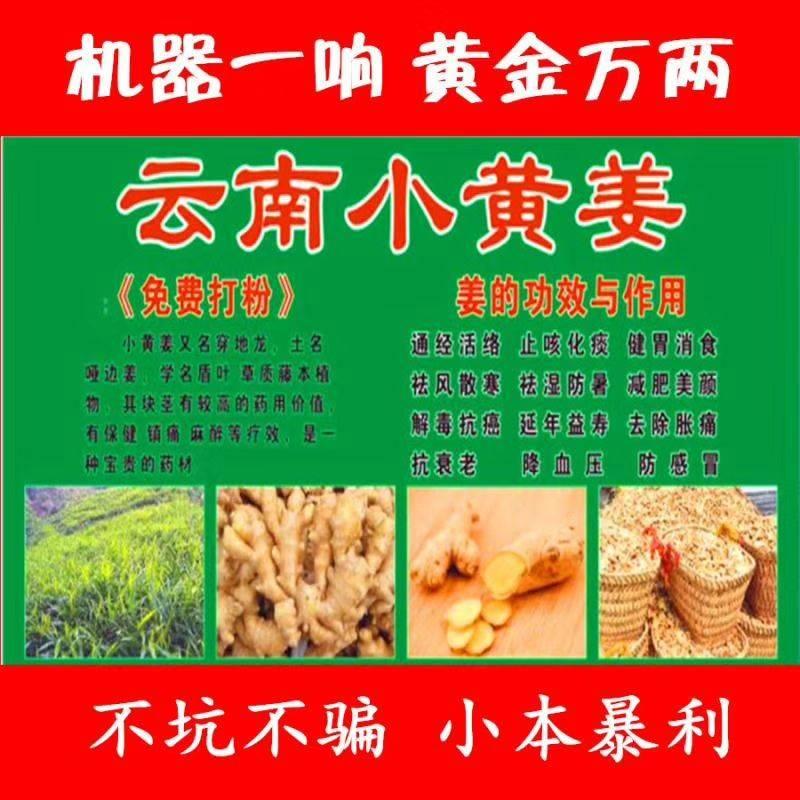 小黃姜干姜片 散裝 6-12個月