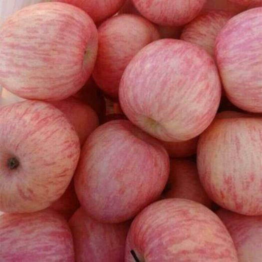 湖北省黃岡市蘄春縣紅富士蘋果 光果 條紅 75mm以上