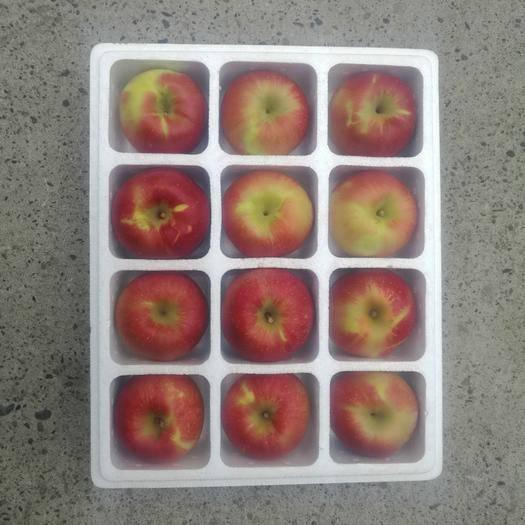 吉林省延邊朝鮮族自治州琿春市紅富士蘋果 光果 片紅 95mm以上