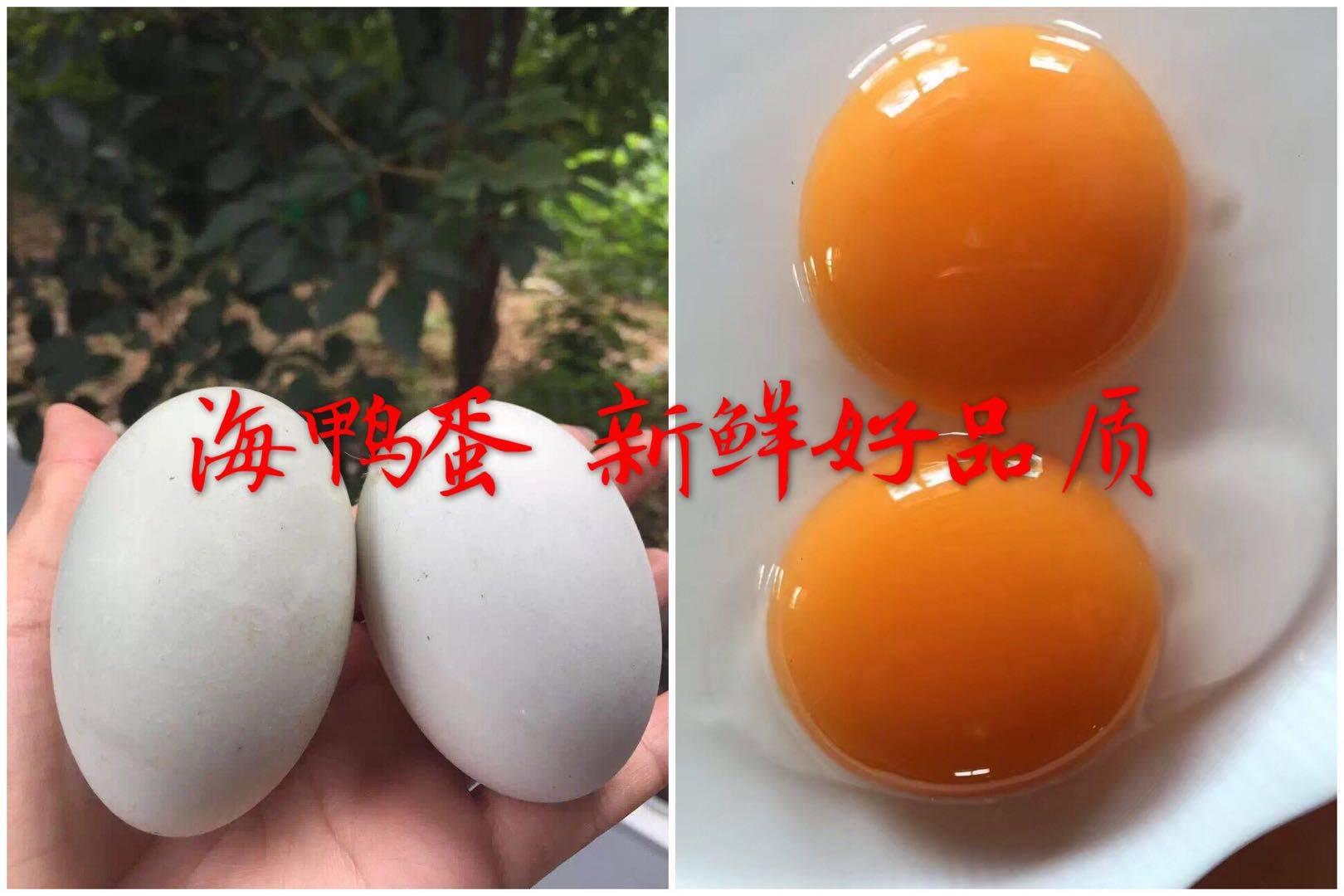 北部灣紅樹林烤海鴨蛋65克20枚