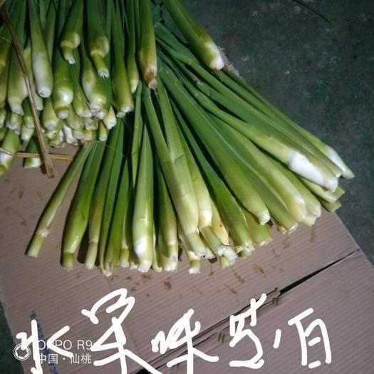 湖北省仙桃市仙桃市 早熟双季水果味茭白种茎苗