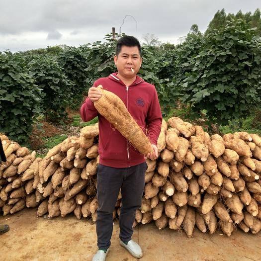 广西壮族自治区梧州市藤县人工种植葛根 3.0-3.5斤
