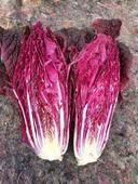 紫色大白菜 2~3斤 凈菜