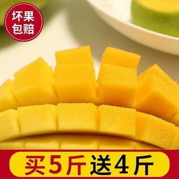 【熱售】當季熱帶現摘青芒 玉芒 大芒果 發九斤凈果