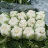 秋寶白菜 3~6斤 凈菜