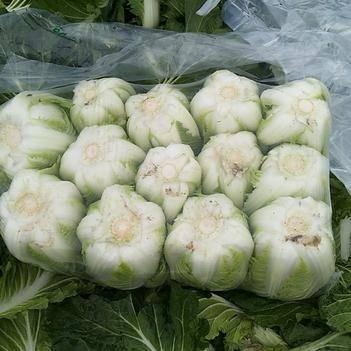 秋宝白菜 3~6斤 净菜