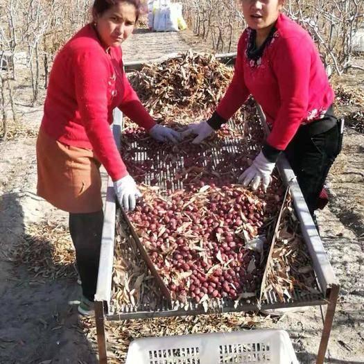 2019新货上市新疆红枣 同比质量低价走量对接电商,微商超市