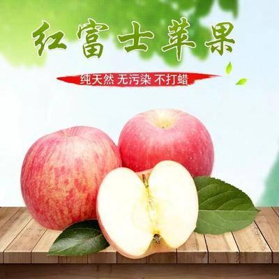 山東省聊城市莘縣紅富士蘋果 75mm以上 片紅 膜袋