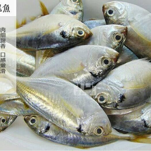 广东省湛江市徐闻县石爬鱼