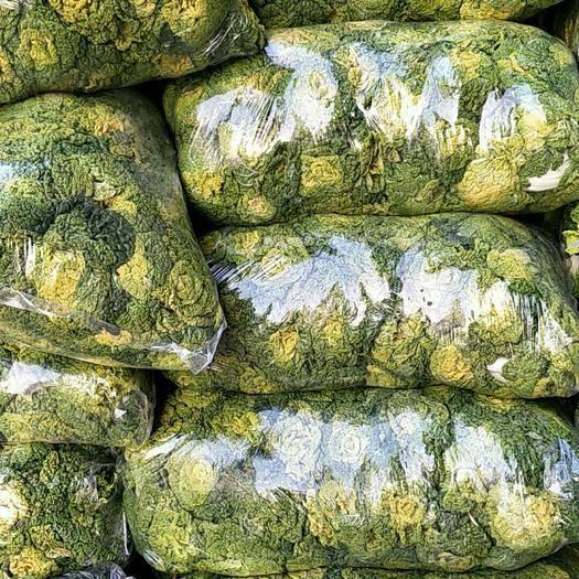 安徽省蚌埠市怀远县 黄心菜大量上市,矮颗质量好。全国发货净菜上车,可长期合作