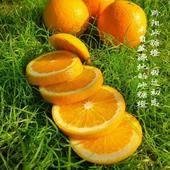 黔陽冰糖橙 65 - 70mm 4兩以下