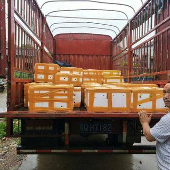 中國龍蝦 456青蝦