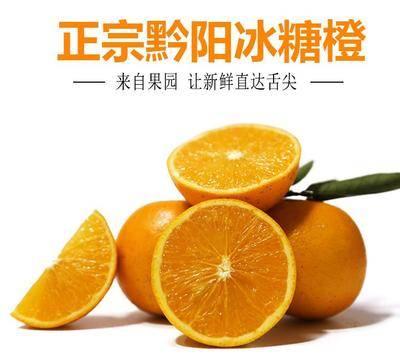 湖南省怀化市洪江市黔阳冰糖橙 55mm以下 4两以下