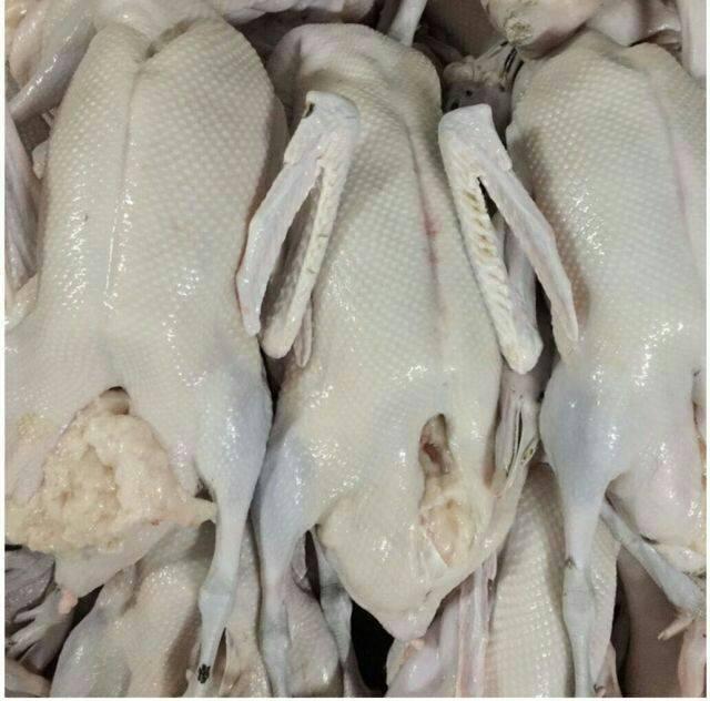 [肉鹅批发]肉鹅 810斤 统货 半圈养半散养 价格23元/斤