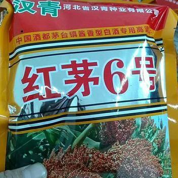 紅茅六號高粱種子 常規種 ≥95%