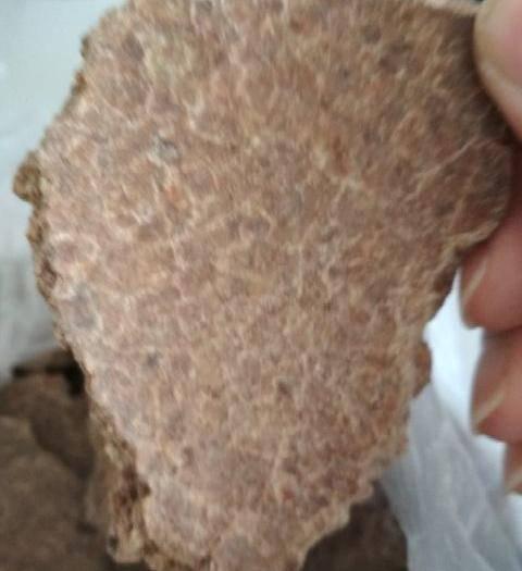天津市濱海新區禾谷類飼料 供應天津港進口蘇丹花生餅,蛋白48脂肪7以上