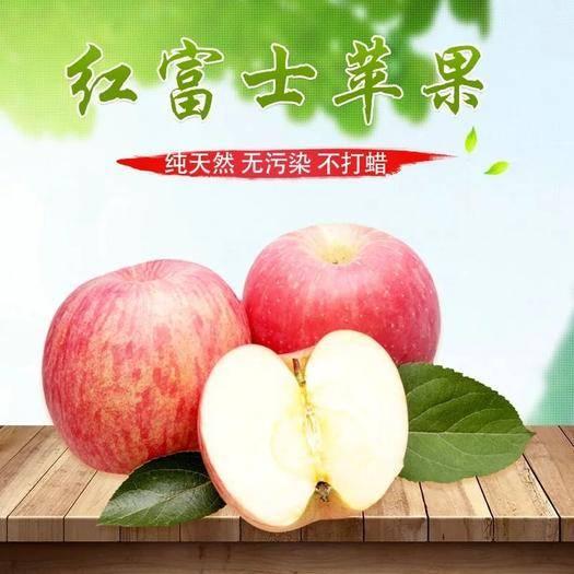 山東省聊城市莘縣 [精選包郵]山東脆甜紅富士蘋果85mm以上超大果精品基地直發