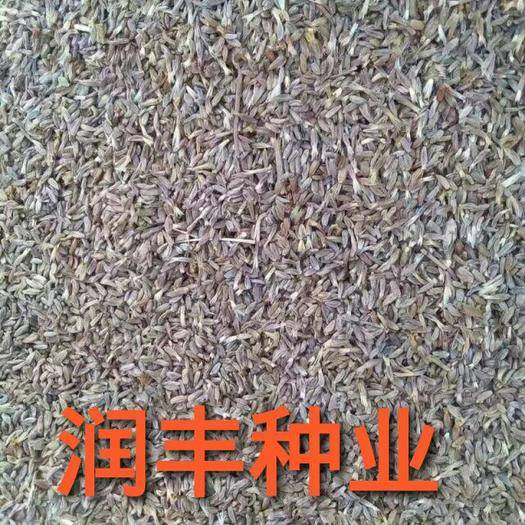 河北省保定市安国市生白术 种子 19年刚产新籽