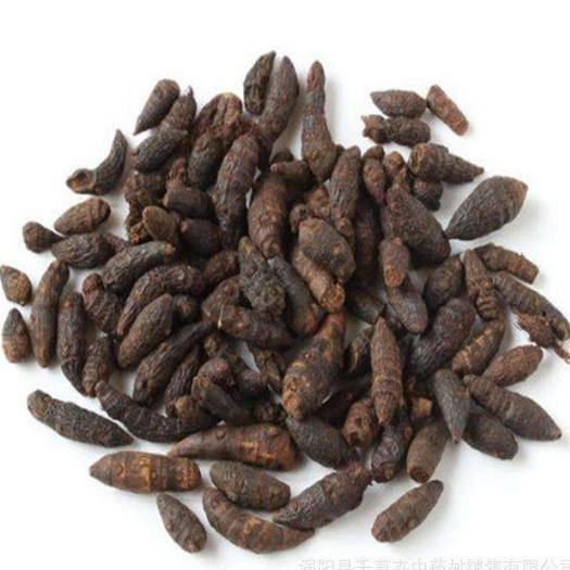 海南省万宁市万宁市 海南香附种植产业,含量足,个头大,品质优,欢迎订购