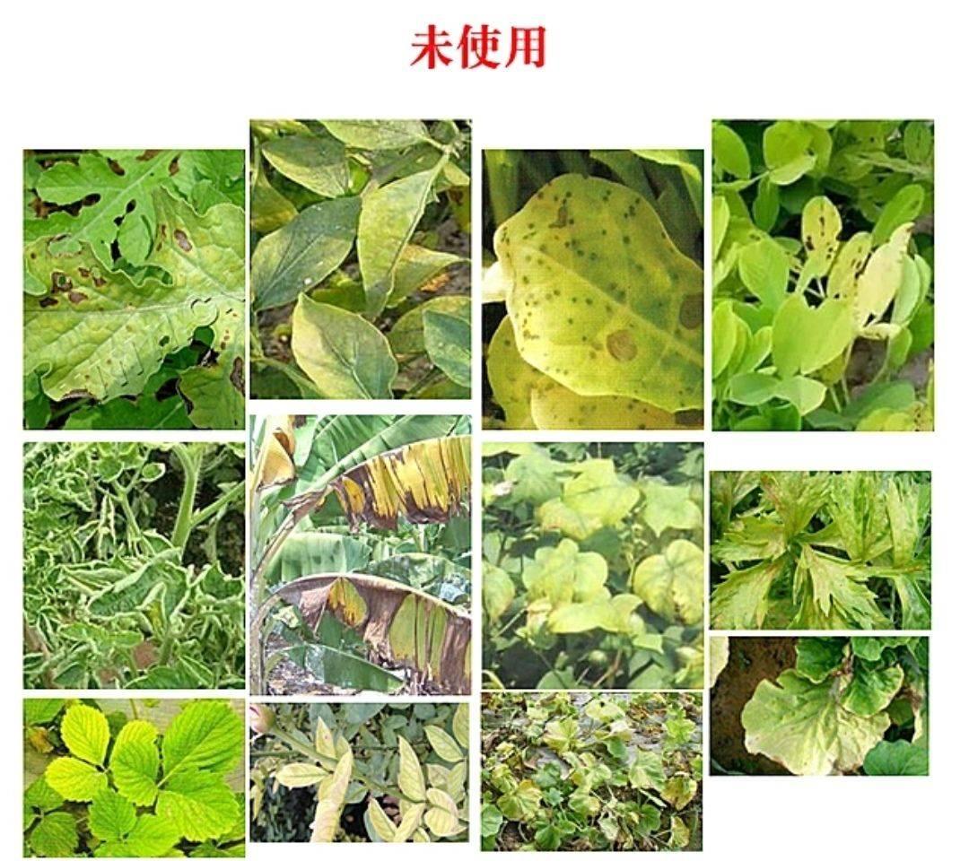 植物生長調節劑農藥 黃葉死苗 一噴綠 黃葉變綠小葉變大生根壯苗保花保果 正品套裝