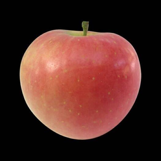 重慶市銅梁區紅富士蘋果 90mm以上 片紅 膜袋