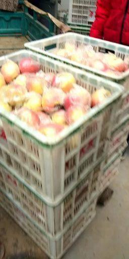 安徽省宿州市碭山縣紅富士蘋果 75mm以上 條紅 膜袋