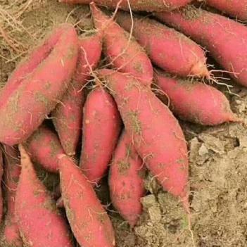 西瓜红红薯2两起