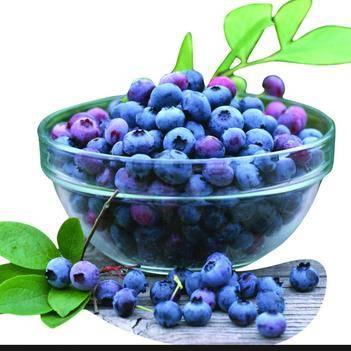 蓝丰蓝莓种子
