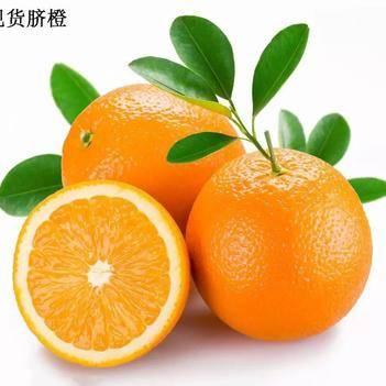 纽荷尔脐橙 【预售】甜橙  一件代发 欢迎各大电商平台合作
