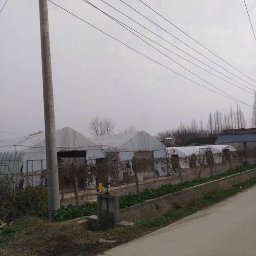 江蘇省南通市如東縣耕整機械租賃 養雞場出售或出租