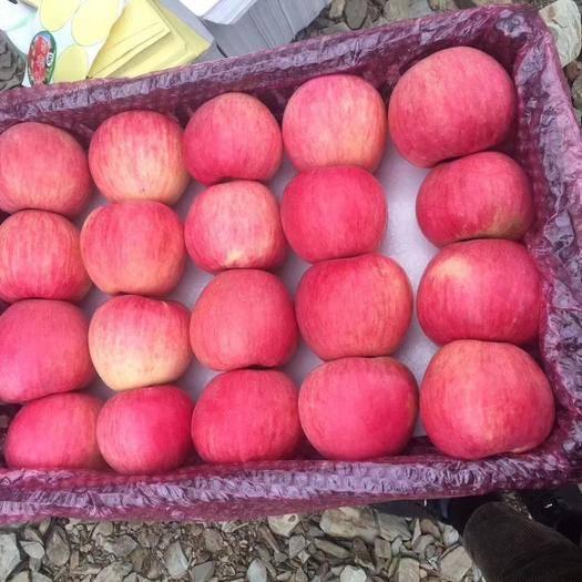 山東省臨沂市沂水縣 山東蘋果 暢銷全國