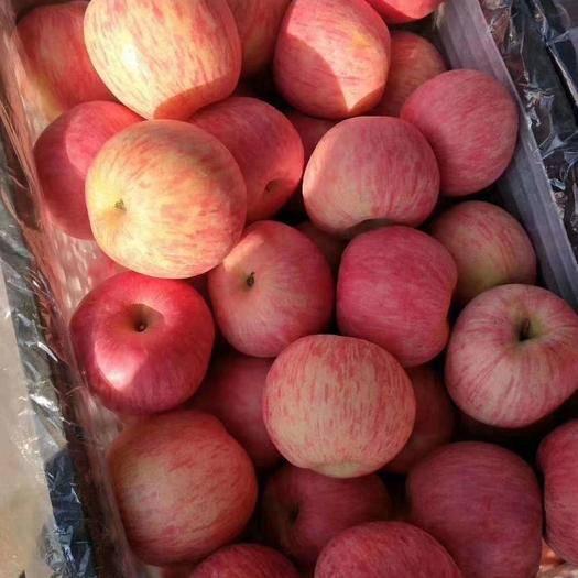 山東省臨沂市沂水縣富士王蘋果 75mm以上 片紅 膜袋