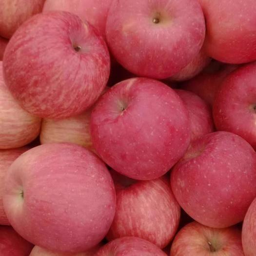 山東省臨沂市沂水縣長富2號蘋果 75mm以上 片紅 膜袋