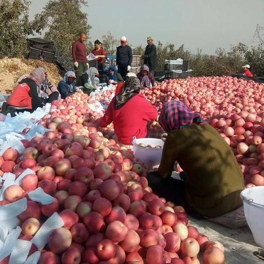 山東省臨沂市沂水縣 紅富士蘋果基地 一手貨源 價格合適