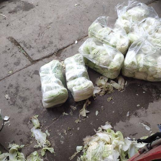 河南省鄭州市中牟縣膠州大白菜 1~2斤 凈菜