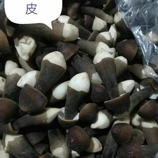 广东省广州市白云区蘑菇  鸡纵菌