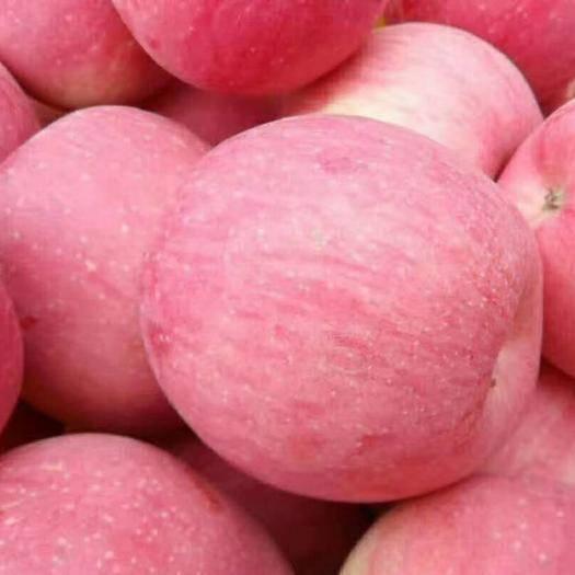 山東省日照市東港區 【??旺鋪??】山東日照蘋果產地一手貨源批發紅富士蘋果
