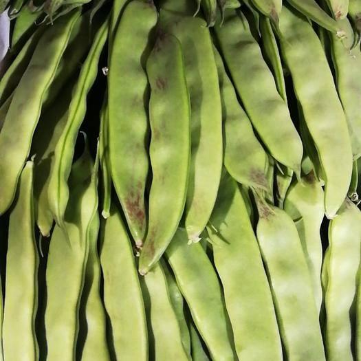 辽宁省锦州市北镇市油豆 6~8cm以上 不打冷