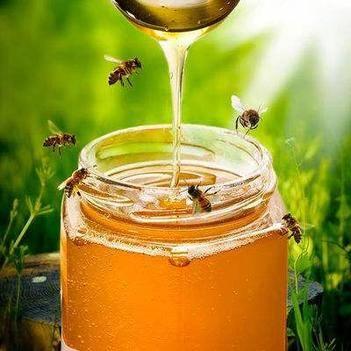 包郵土蜂蜜500g蜂蜜批發貼牌蜂蜜散裝批發蜂蜜源頭廠家