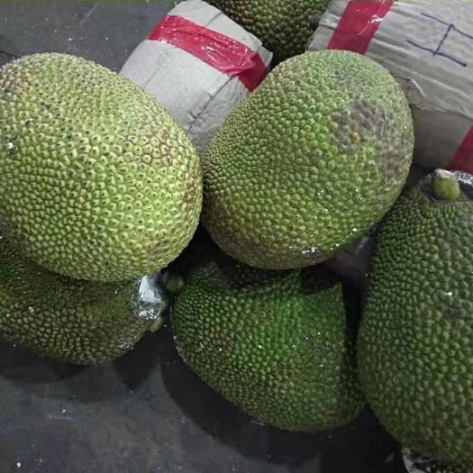 广西壮族自治区崇左市凭祥市 越南红肉菠萝蜜,品牌承诺保质保量,产地直供,一手货源