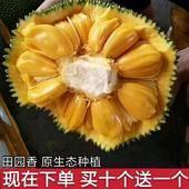 海南菠蘿蜜 23~27斤 果園直供 包郵【店鋪推薦】