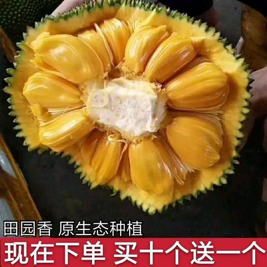 海南省??谑辛?【限时抢购】海南黄肉大树菠萝蜜 果园直供