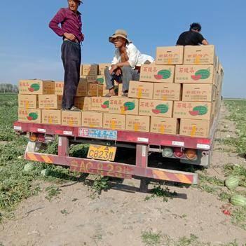 安農2號西瓜 10斤打底 8成熟 1茬 有籽