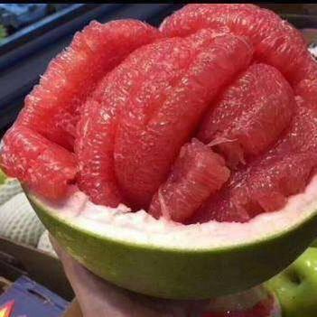 普通柚樹苗 正宗進口泰國紅寶石柚子苗嫁接苗 包正品