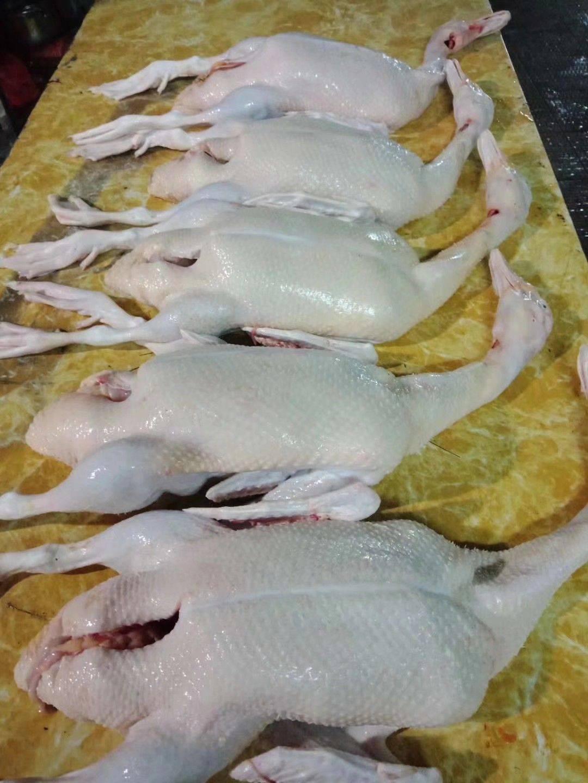 [白条鸭批发]白条鸭 新鲜 价格8.5元/斤