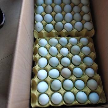 绿壳鸡蛋 480装的11个一斤的!