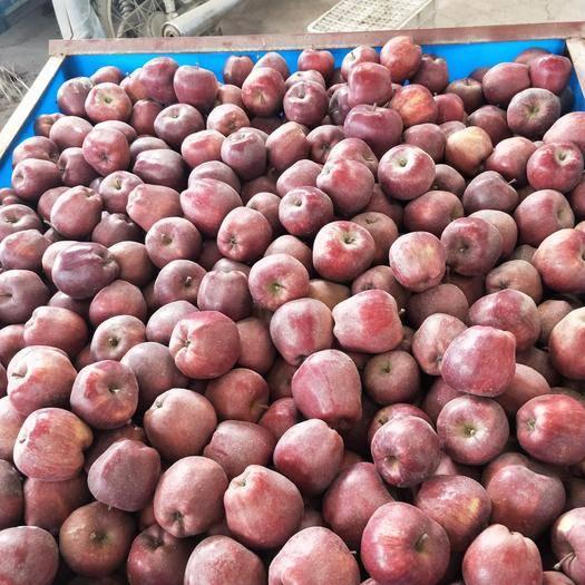 甘肅省隴南市禮縣紅將軍蘋果 70mm以上 銹斑 光果