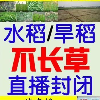 丁草胺 芐嘧丙草胺1畝 直播水稻 旱稻封閉除草劑
