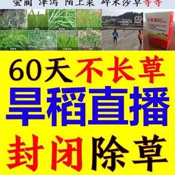 +二甲+吡嘧 旱稻直播封閉除草劑60天不長草 水稻旱直播